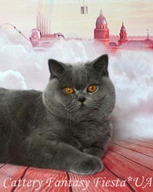 British Shorthair Cattery Fantasy Fiesta Ua